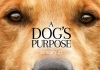 In Review: A Dog's Purpose