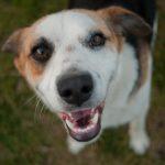 Dog smiling up at the camera