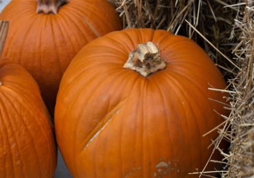 Pumpkin Patches in OKC