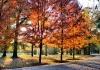 Fall: The Season That Trumps All