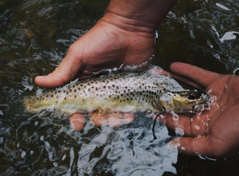 Fishing Spots Near SNU